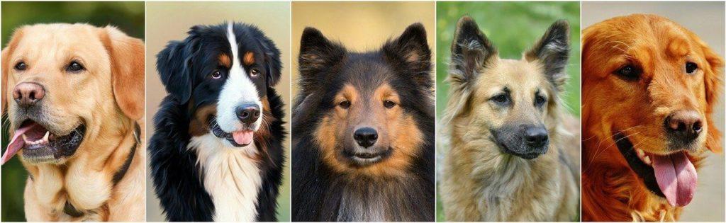 Kutya nevek