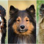 Kutya nevek, kutyanévnapok