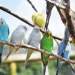 A legnépszerűbb papagáj nevek